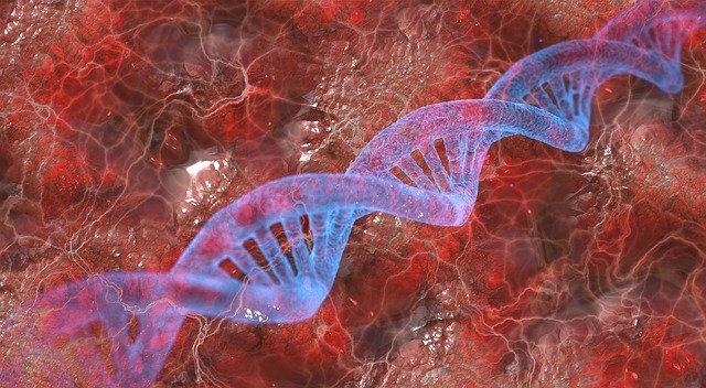 NIPT test – DNA fetale: lo screening prenatale non invasivo